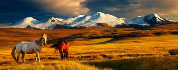 mongolia-header.jpg